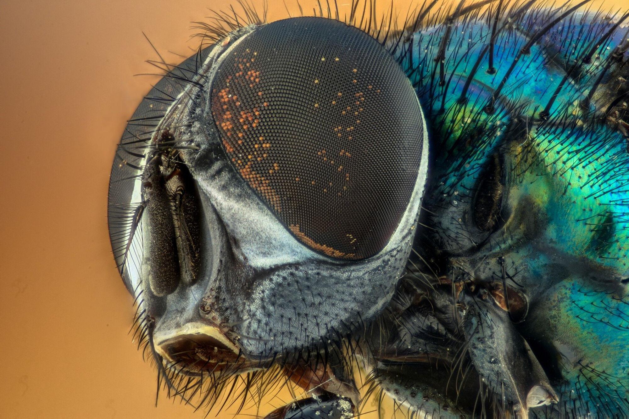 48 млн снимков дикой природы рассмотрели биологи иботаники