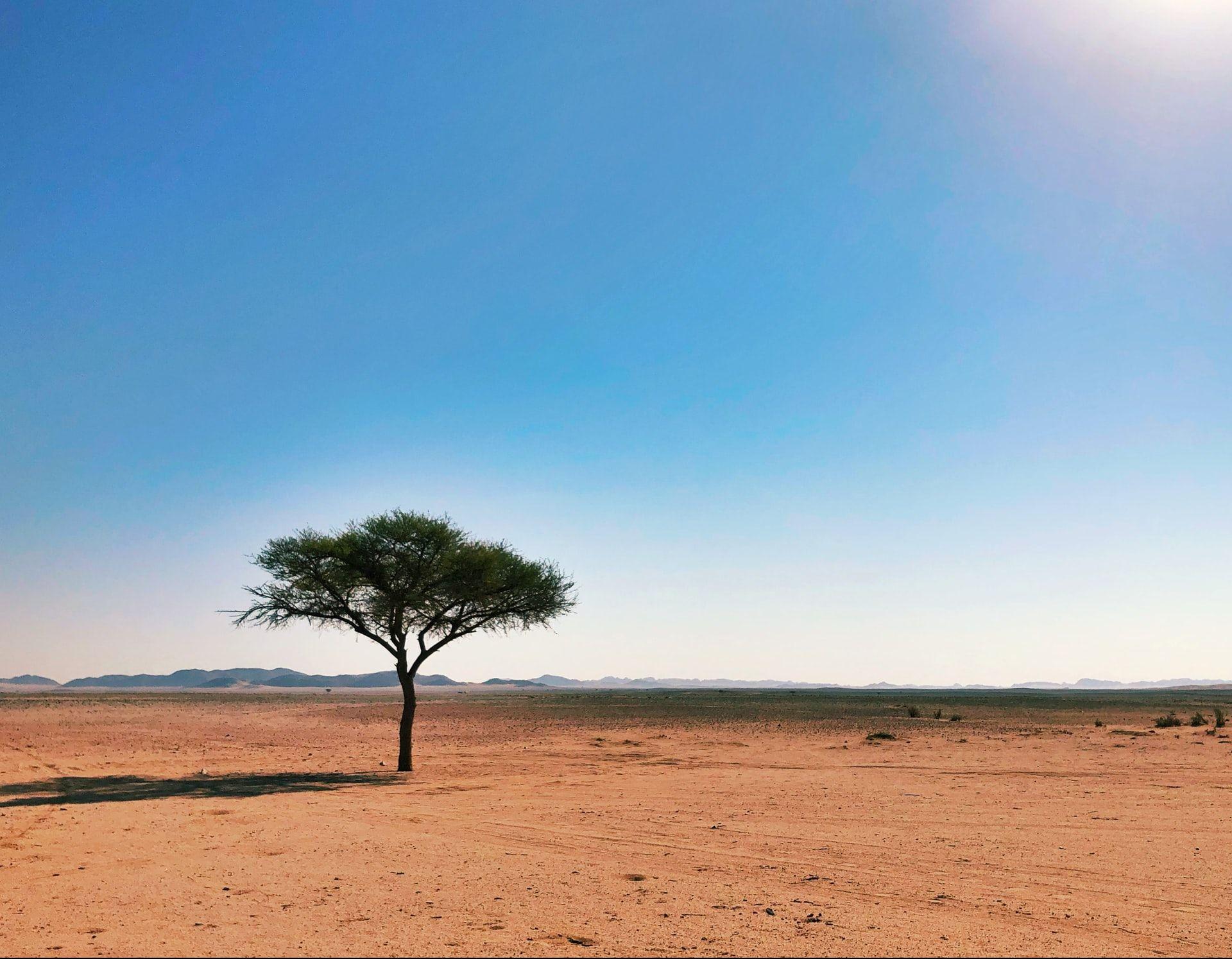 1,8 млн деревьев нейросеть нашла впустыне Сахара