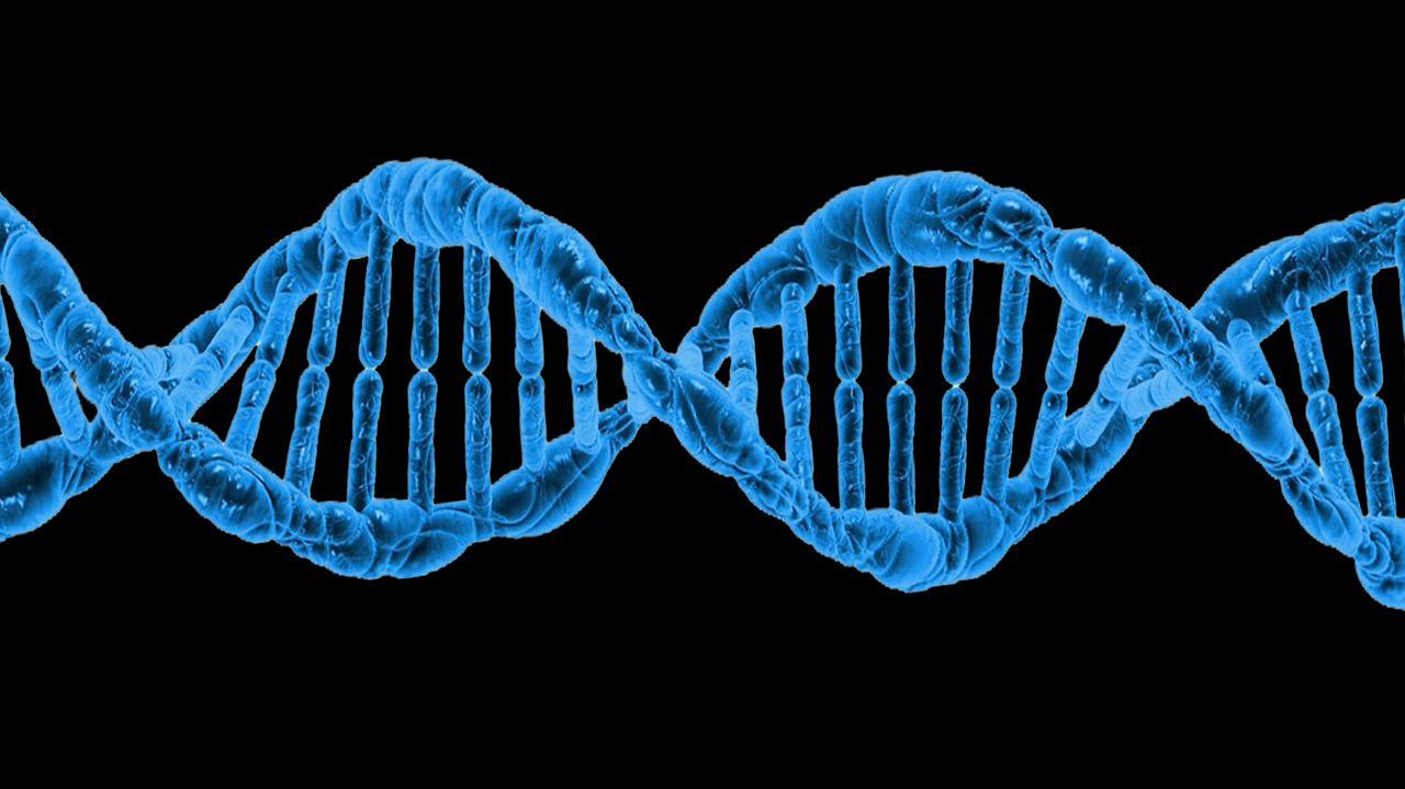 1,3 млн геномов людей проанализировали биологи из Нидерландов