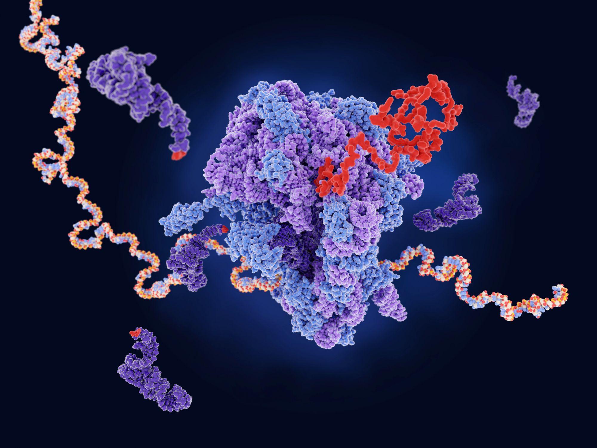Трансляция РНК. В клетках живых организмов рибосомы (в центре) производят белки (красный) по «рецепту», который считывают с ДНК или РНК (цветная цепочка)