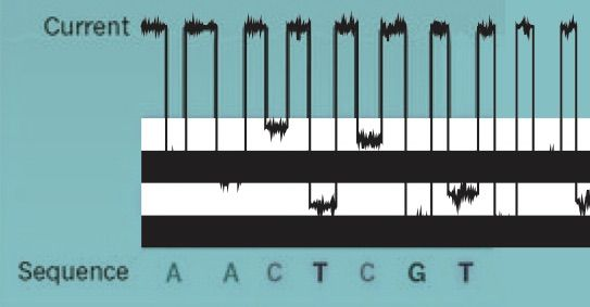 Биомикросхема. Метод распознавания по электрическому сопротивлению работает быстро. Одна нанопора определяет свыше 250 нуклеотидов в секунду