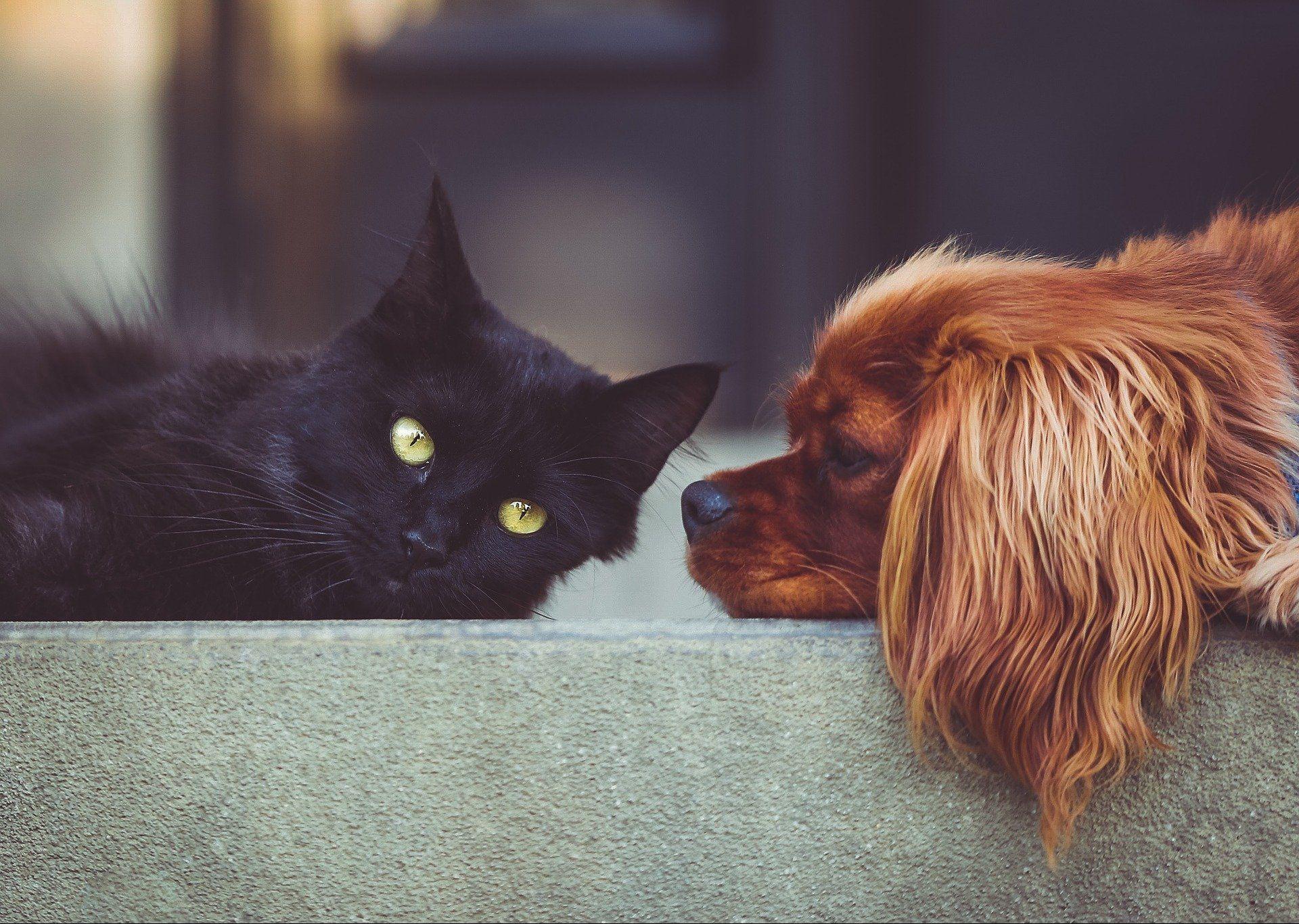 Появился «умный» сервис поиска домашних животных