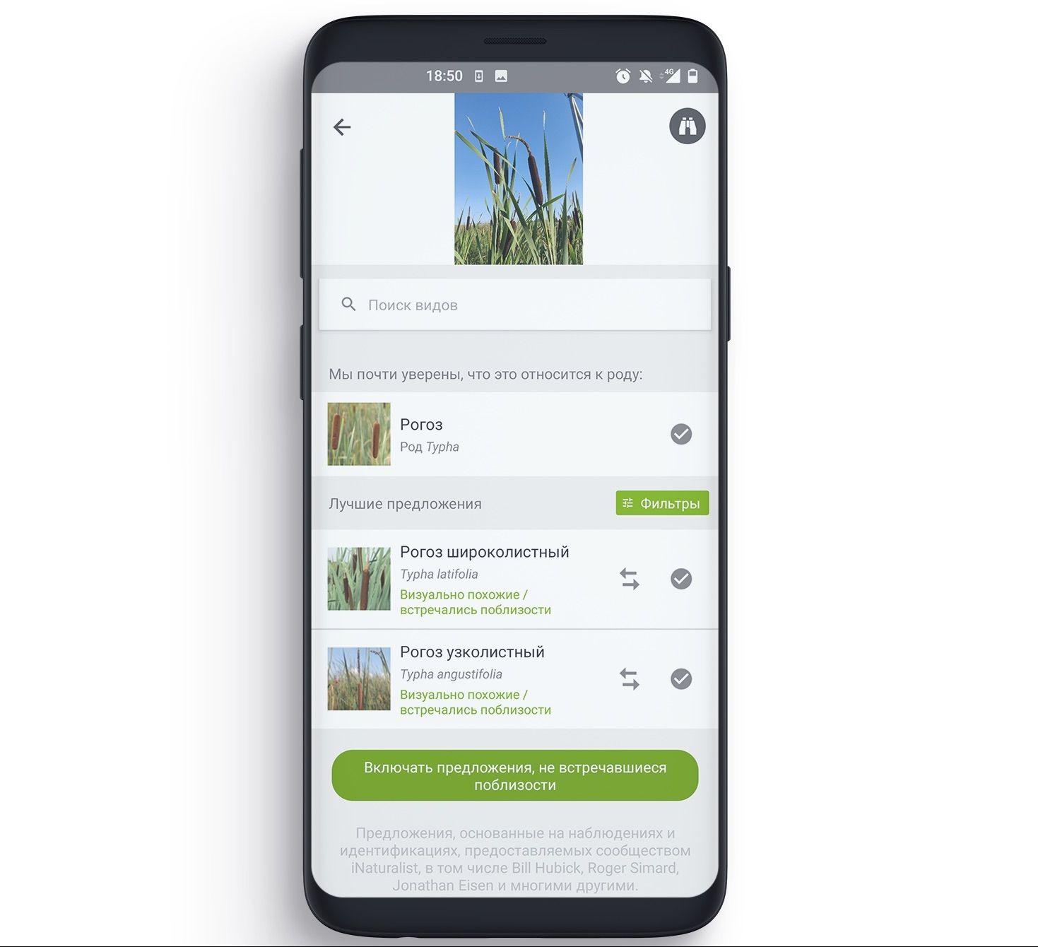 Проанализировав фотографию, искусственныйинтеллект iNaturalist предложит варианты видовой принадлежности растения или животного